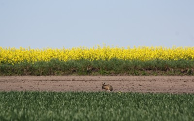 Krajobraz Krasnobrodzkiego parku Krajobrazowego, fot. K. Kowalczuk (3)