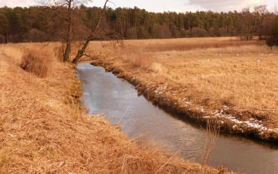 Rzeka Wieprz, fot. K. Kowlaczuk (1)