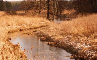 Rzeka Wieprz, fot. K. Kowlaczuk (2)