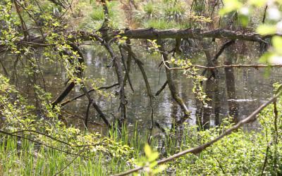 Użytek ekologiczny Belfont, fot. K. Kowalczuk (1)