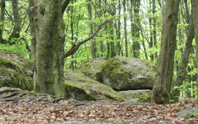 Wzgórze Kamień - pomnik przyrody nieożywionej, fot. K. Kowlaczuk (3)