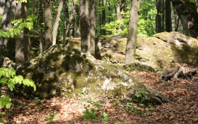 Wzgórze Kamień - pomnik przyrody nieożywionej, fot. K. Kowlaczuk (7)