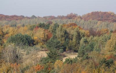 Jesień w Szczebrzeszyńskim Parku Krajobrazowym, fot. K. Kowlaczuk (13)
