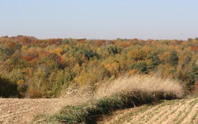 Jesień w Szczebrzeszyńskim Parku Krajobrazowym, fot. K. Kowlaczuk (15)