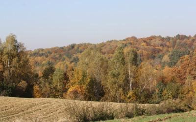 Jesień w Szczebrzeszyńskim Parku Krajobrazowym, fot. K. Kowlaczuk (17)