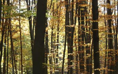 Las Cetnar jesienią, fot. K. Kowlaczuk (2)