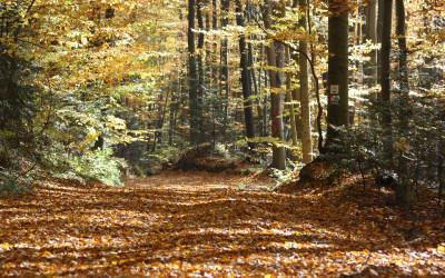 Las Cetnar jesienią, fot. K. Kowlaczuk (3)