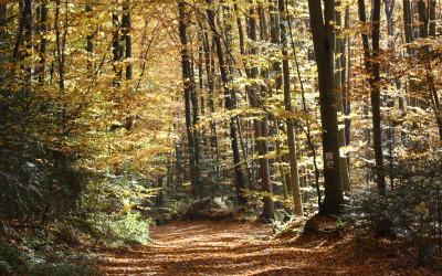 Las Cetnar jesienią, fot. K. Kowlaczuk (4)