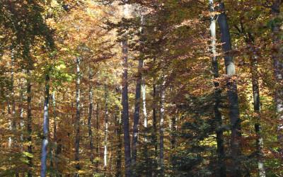 Jesień w Południoworoztoczańskim, fot. K. Kowalczuk (1)