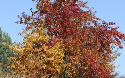 Jesień w Południoworoztoczańskim, fot. K. Kowalczuk (3)