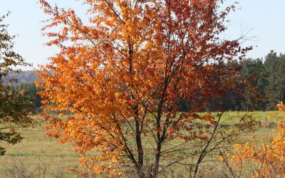 Jesień w Południoworoztoczańskim, fot. K. Kowalczuk (5)
