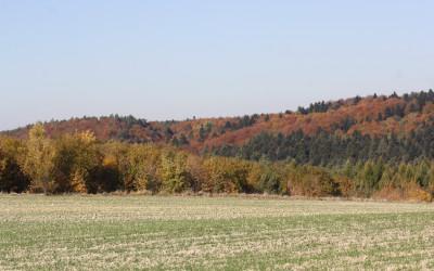Jesień w Południoworoztoczańskim, fot. K. Kowalczuk (8)