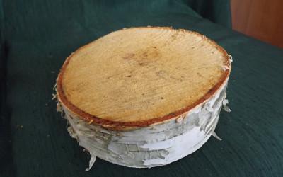 Brzoza brodawkowata Betula pendula