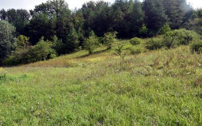Murawy w obszarze Natura 2000