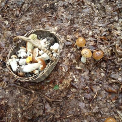 Gdy we wrześniu grzybów brak, niezawodny zimy znak.