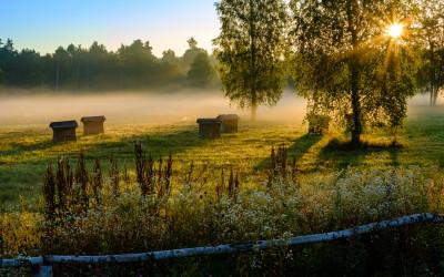 """1 miejsce Marcin Górecki, """"Wschód słońca nad pasieką"""" (Lubelskie pszczoly i pasieki - LPP)"""