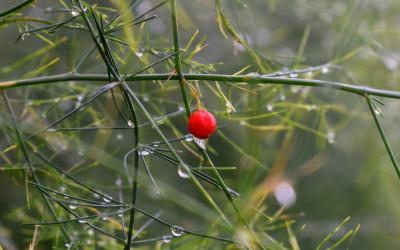 Miejsce V_Pośród deszczu fot. A. Olejarz