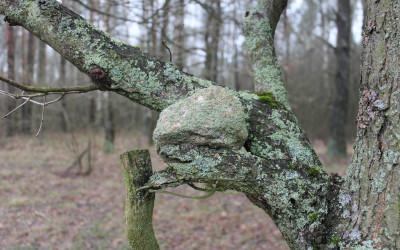 Tajemniczy omszony kamień