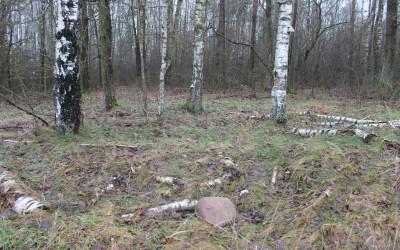 wejście w głąb lasu