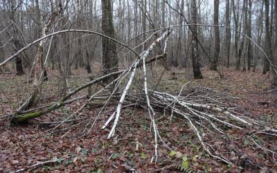 Fot.5. Pośród lasu z gałęzi szałasy