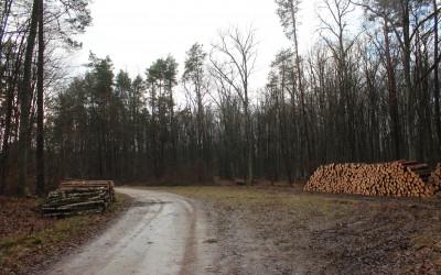 4. Metry drzewa na zakręcie w wariancie 1