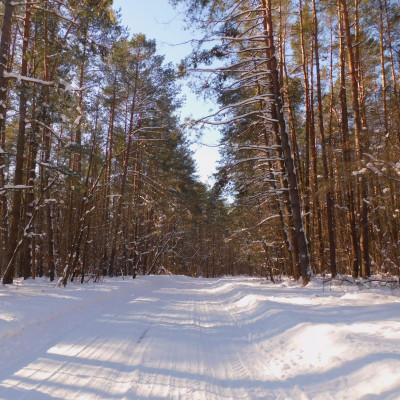 Zimowe pocztówki z Krasnobrodzkiego Parku Krajobrazowego