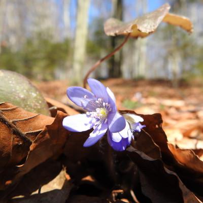 Wiosna idzie pieszo