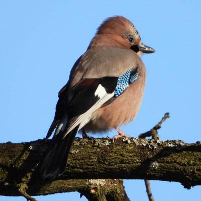 Birdwatching w Sobieszynie
