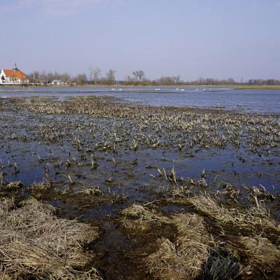 Jeziorzany nad Wieprzem – lubelska Biebrza